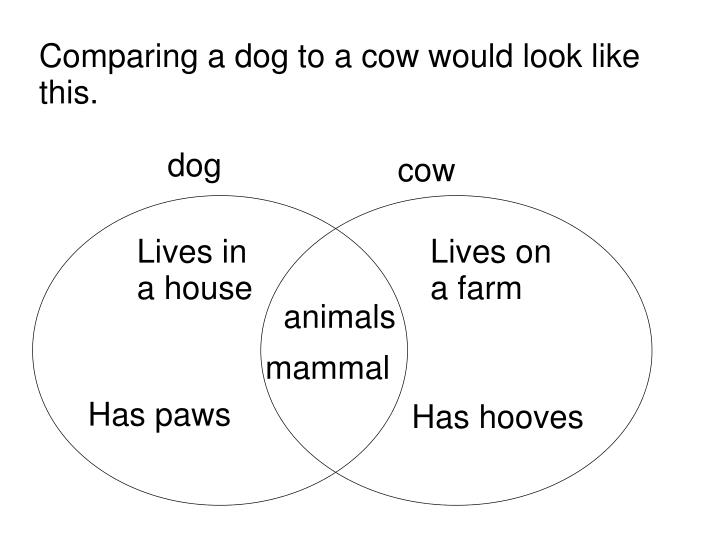 Comparing a dog to a cow would look like this.
