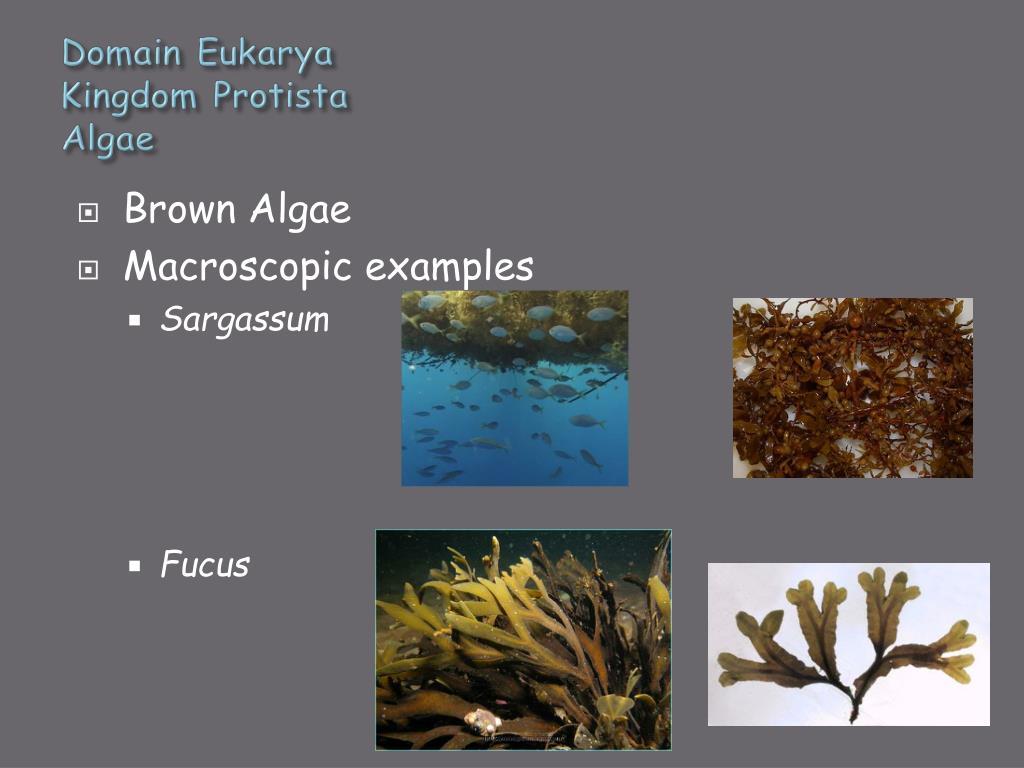 PPT - General Biology II Lab PowerPoint Presentation - ID ...
