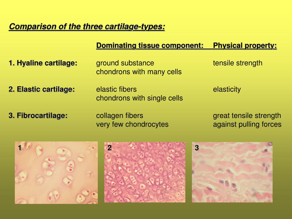 Ppt Histology 1 9 Supportive Tissues Powerpoint Presentation