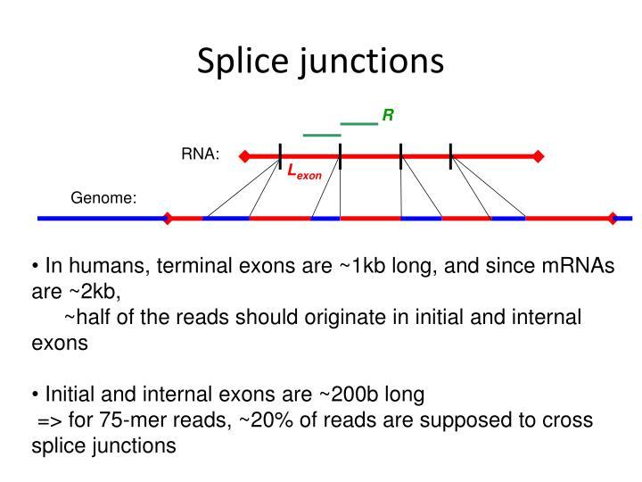 Splice junctions