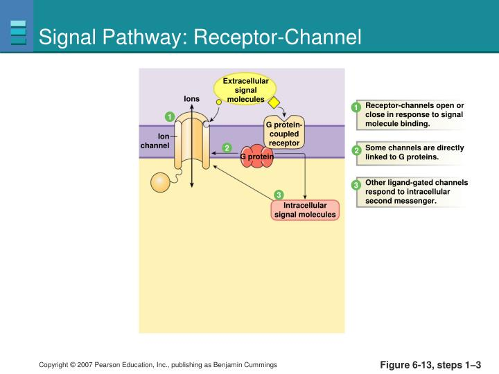 Signal Pathway: Receptor-Channel