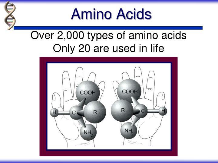 Over 2,000 types of amino acids