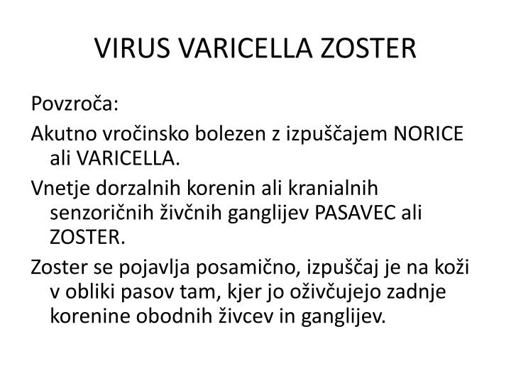 VIRUS VARICELLA ZOSTER