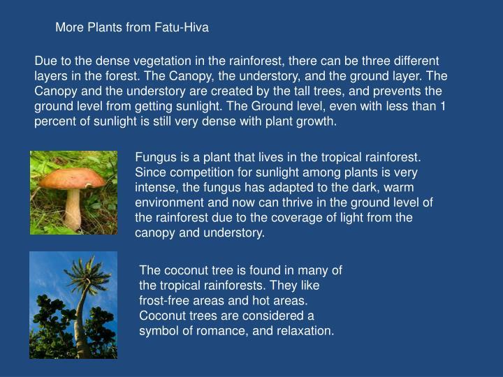 More Plants from Fatu-Hiva