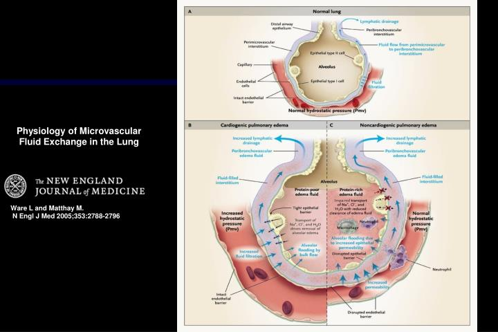 Physiology of Microvascular Fluid Exchange in the Lung