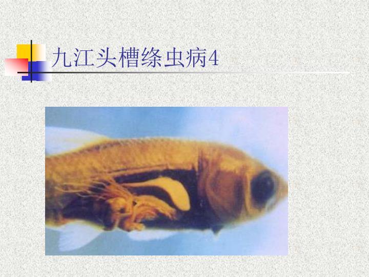九江头槽绦虫病