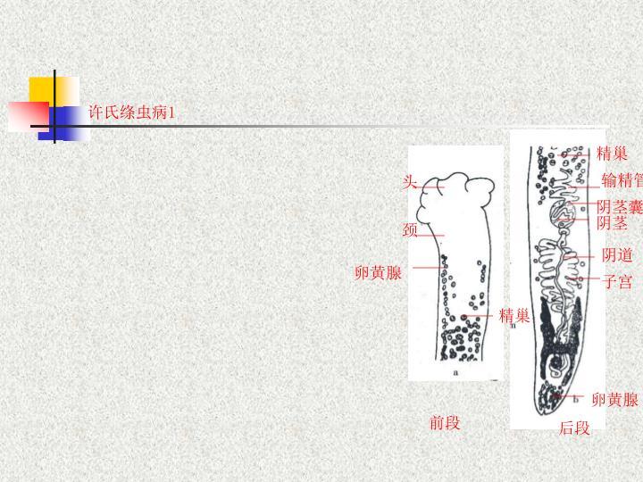 许氏绦虫病1