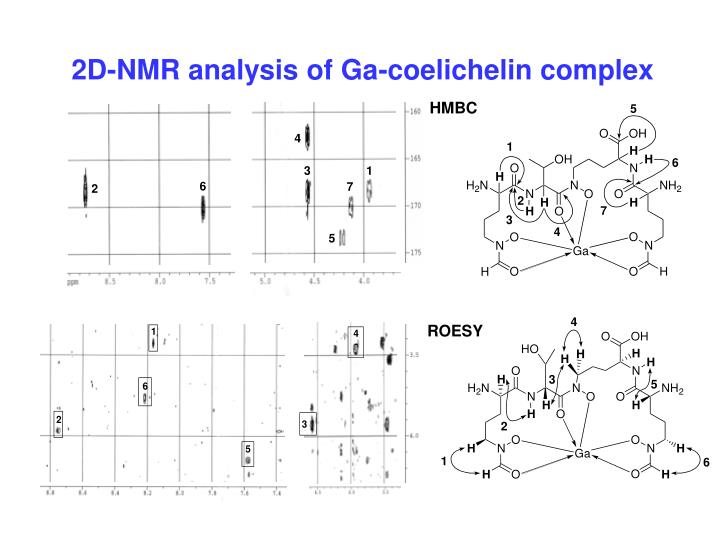 2D-NMR analysis of Ga-coelichelin complex