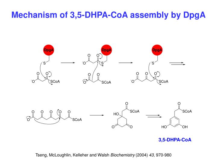 Mechanism of 3,5-DHPA-CoA assembly by DpgA