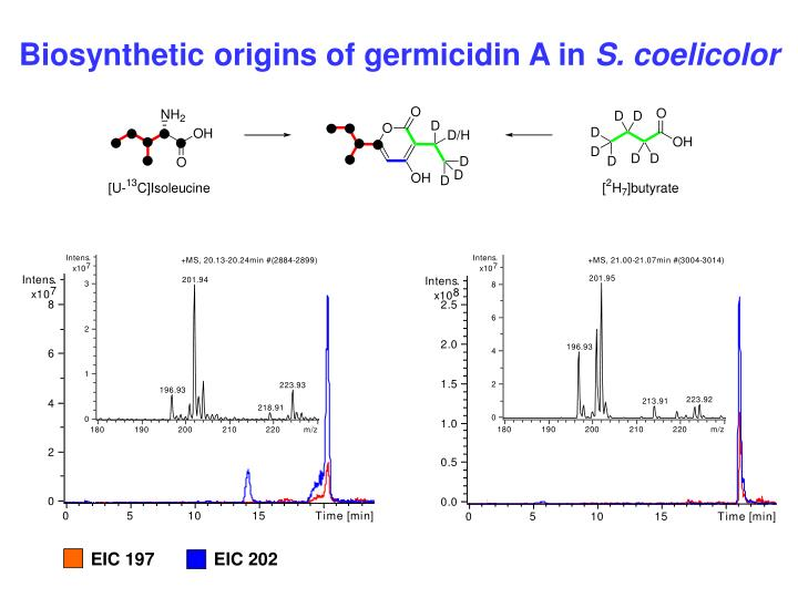 Biosynthetic origins of germicidin A in