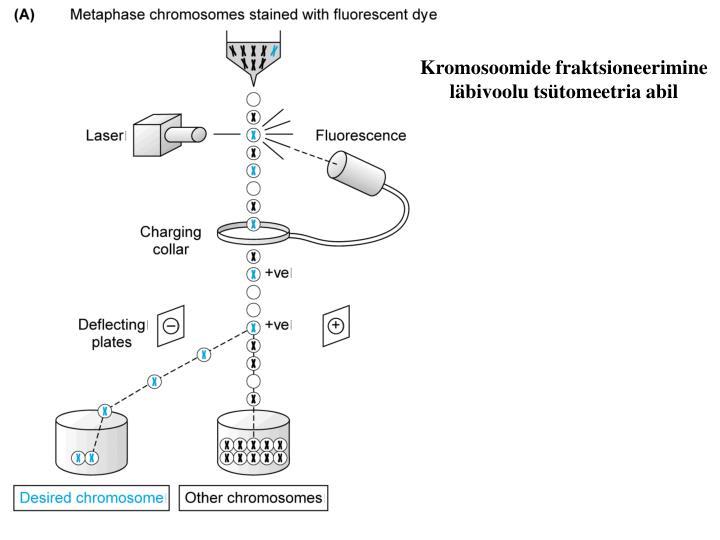 Kromosoomide fraktsioneerimine läbivoolu tsütomeetria abil
