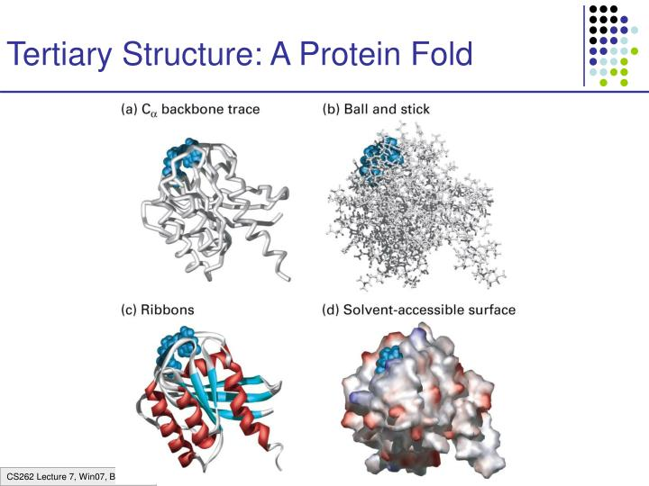 Tertiary Structure: A Protein Fold