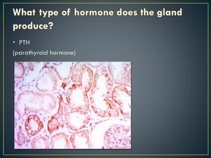 What type of hormone does the gland produce