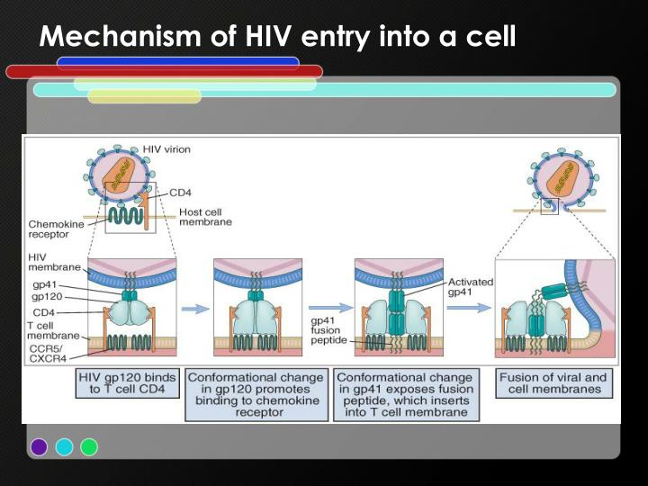 Mechanism of HIV entry into a cell