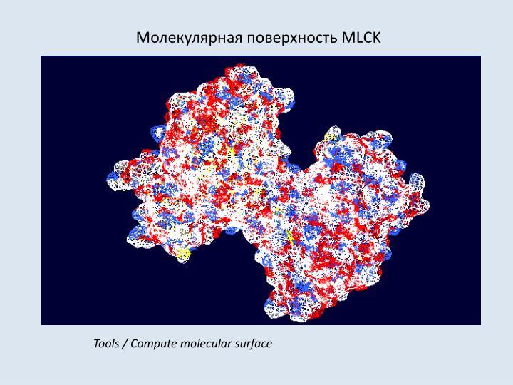 Молекулярная поверхность