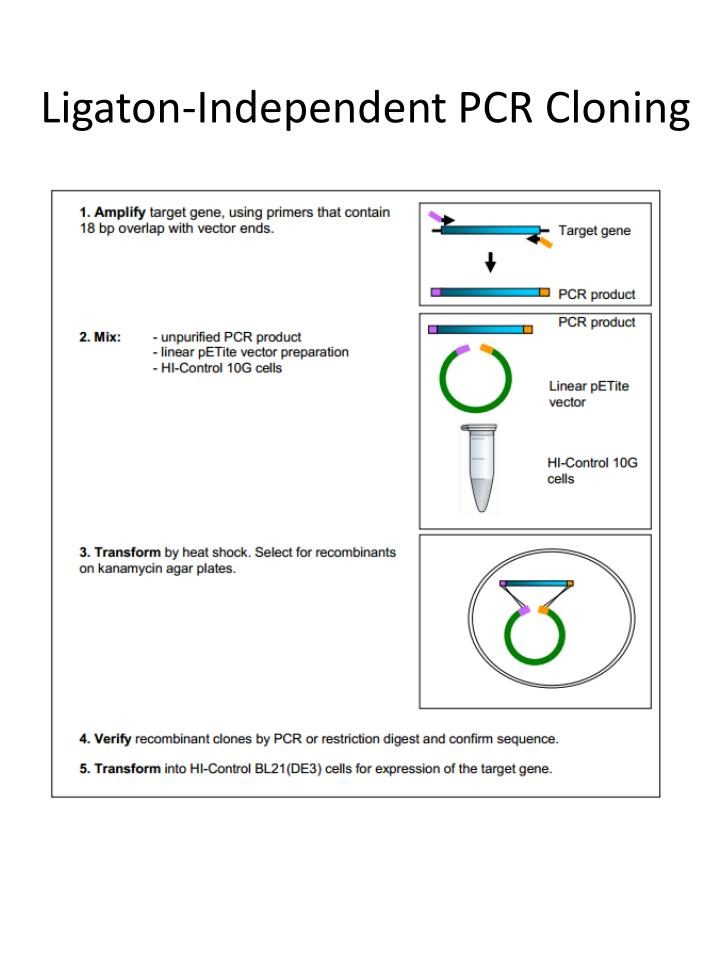 Ligaton-Independent PCR Cloning