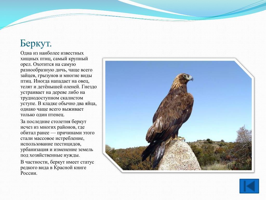 Узоры и картинки с птицами мусора