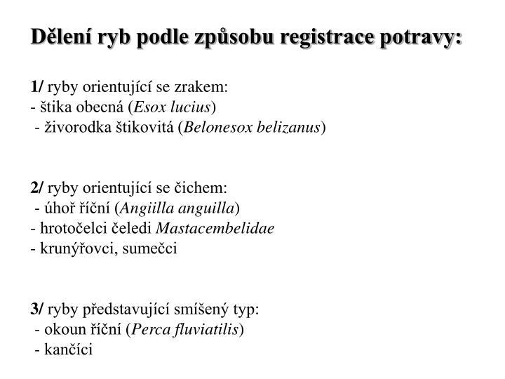 Dělení ryb podle způsobu registrace potravy: