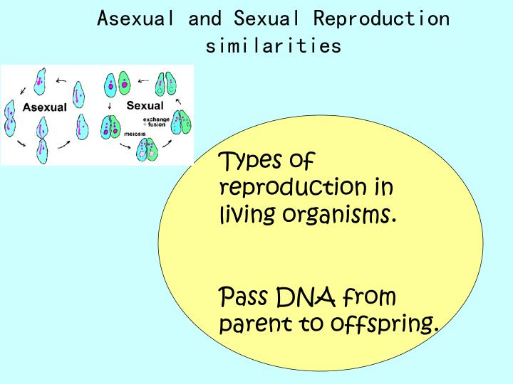 Asexual and sexual reproduction similarities