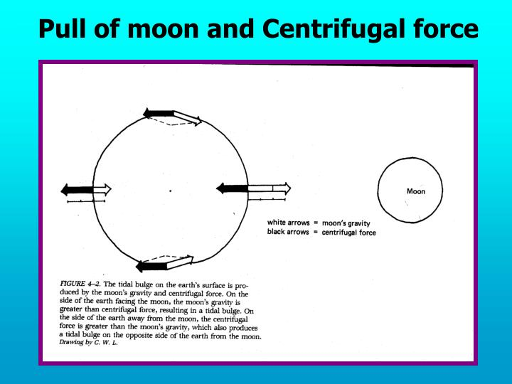 Pull of moon and Centrifugal force