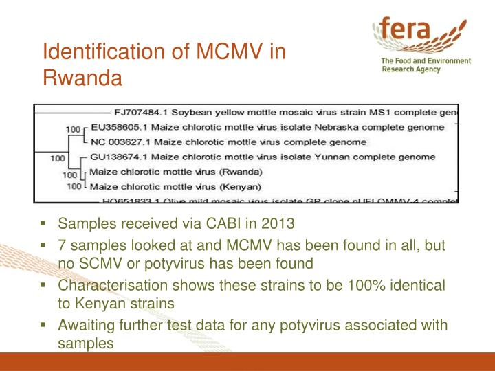 Identification of MCMV in Rwanda