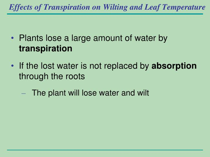 Effects of Transpiration on Wilting and Leaf Temperature
