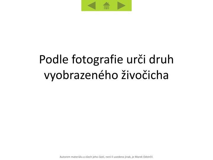 Podle fotografie urči druh vyobrazeného živočicha