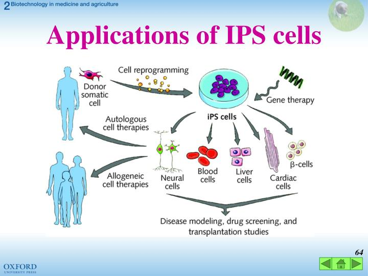 Applications of IPS cells
