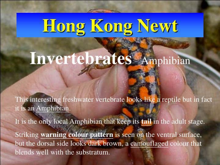 Hong Kong Newt