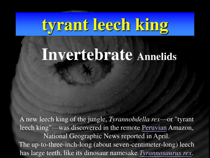tyrant leech king