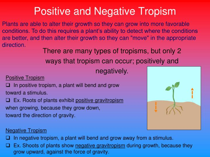 Negative Tropism In Plants Definition The Best 2018. Tropism By Rachael Smith. Worksheet. Plant Tropism Worksheet At Mspartners.co