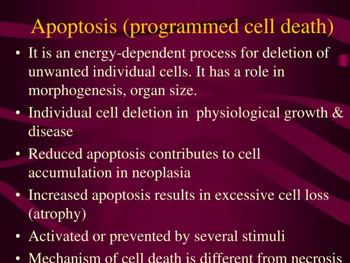 Apoptosis (programmed cell death)