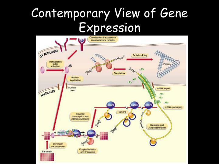 Contemporary View of Gene Expression