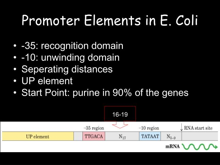 Promoter Elements in E. Coli
