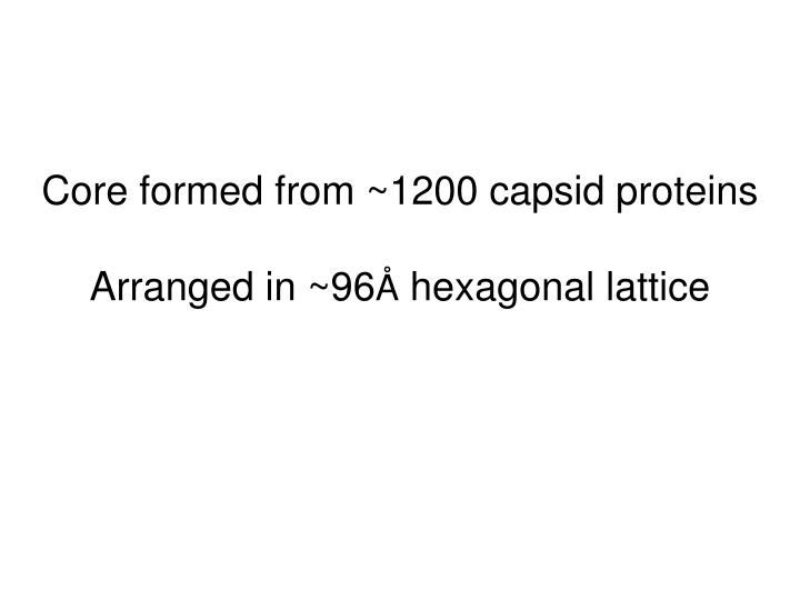 Core formed from ~1200 capsid proteins