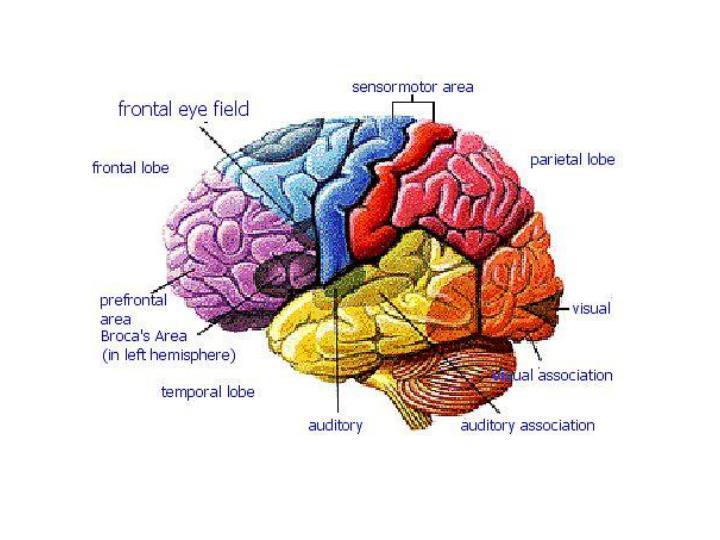 Brain boot camp
