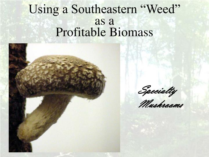 Using a southeastern weed as a profitable biomass