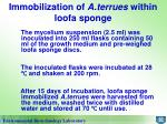 immobilization of a terrues within loofa sponge