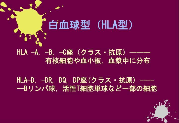 白血球型(