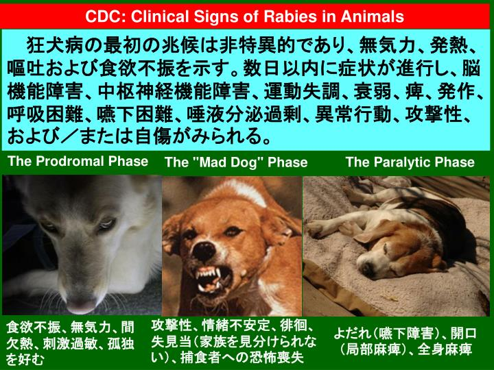 CDC: Clinical Signs of Rabies in Animals