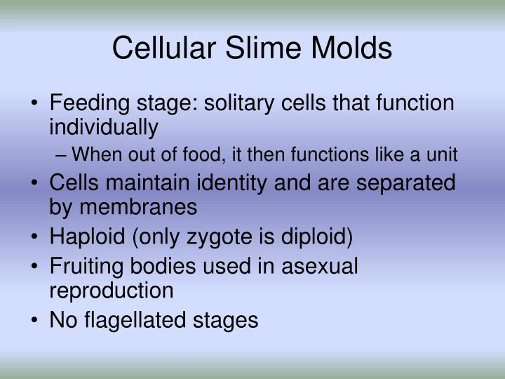 Cellular Slime Molds