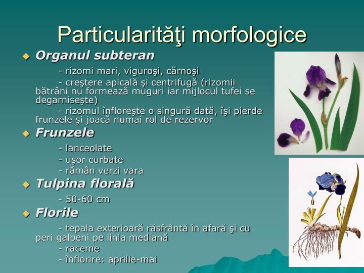 Particularit i morfologice