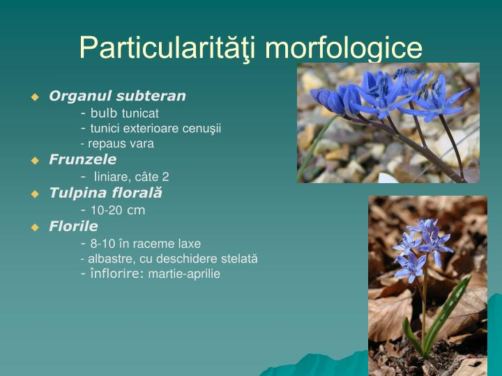 Particularităţi morfologice
