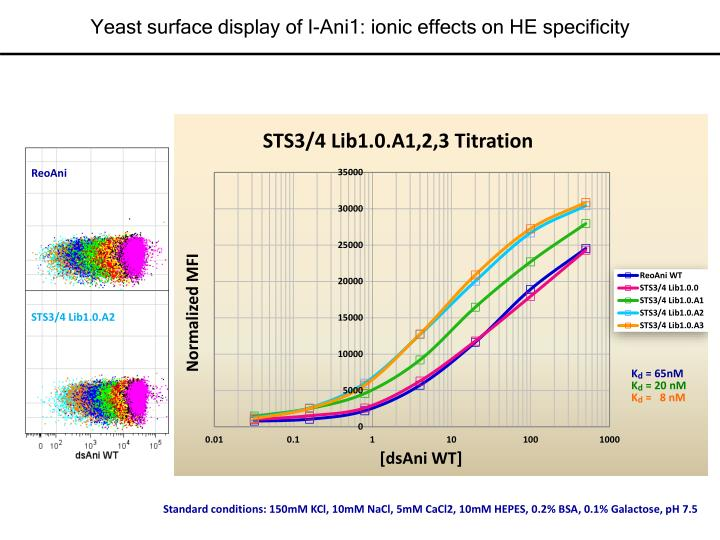 Yeast surface display of I-Ani1: ionic effects on HE specificity