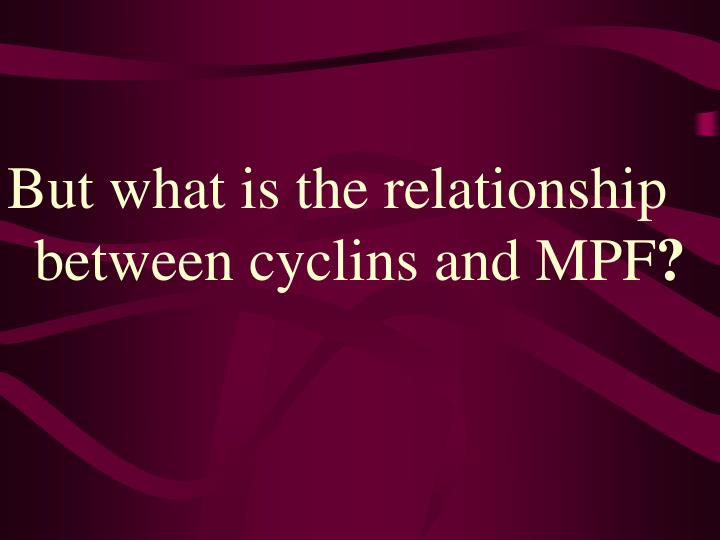 But what is the relationship between cyclins and MPF