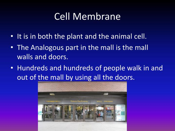 Ppt Cell Parts Analogy Of A Mall Powerpoint Presentation Id4362512