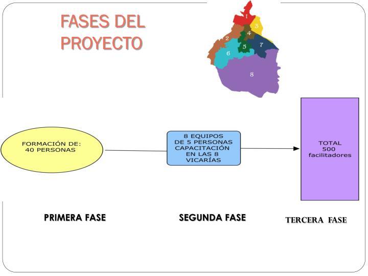 FASES DEL