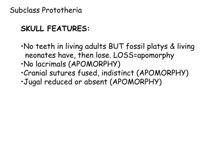 Subclass Prototheria