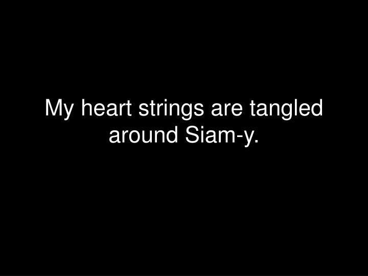 My heart strings are tangled around Siam-y.