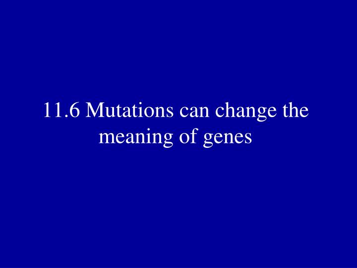 11.6 Mutations can change the meaning of genes
